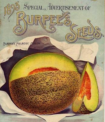 1893 Burpee Catalog