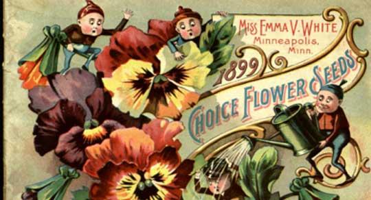 Emma White  Brownies and Pansies