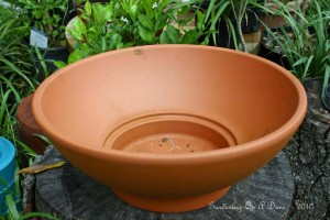 Discounted Clay Planter