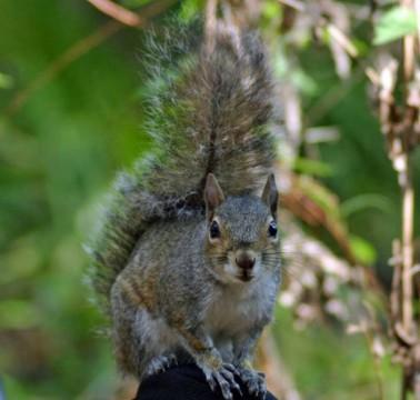 Bird feeder battles: Winning the war against squirrels 4