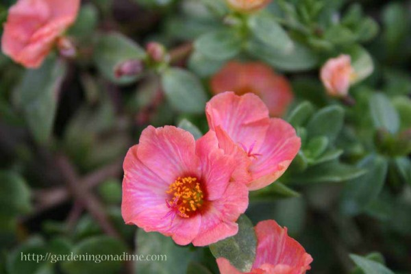 Sunday Garden Quote: Mother's Day 3