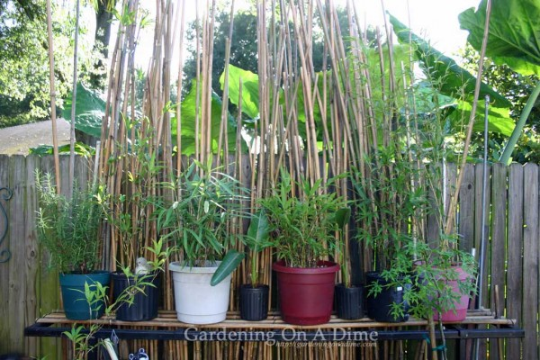 bamboo-pole-screen