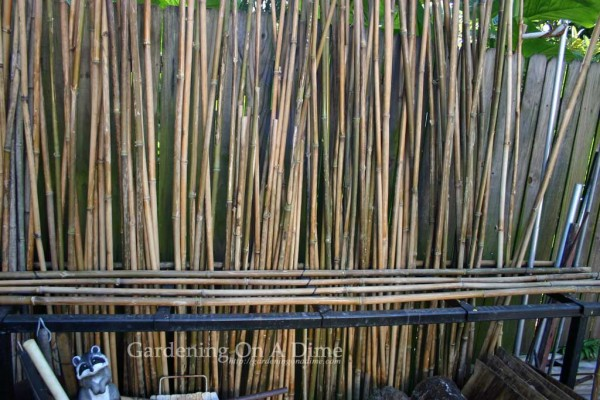 partially-filled-bamboo-pol