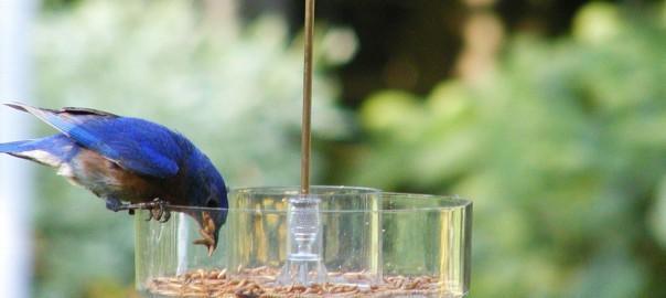 Bird feeding basics: Simple ways to attract birds to your backyard 1
