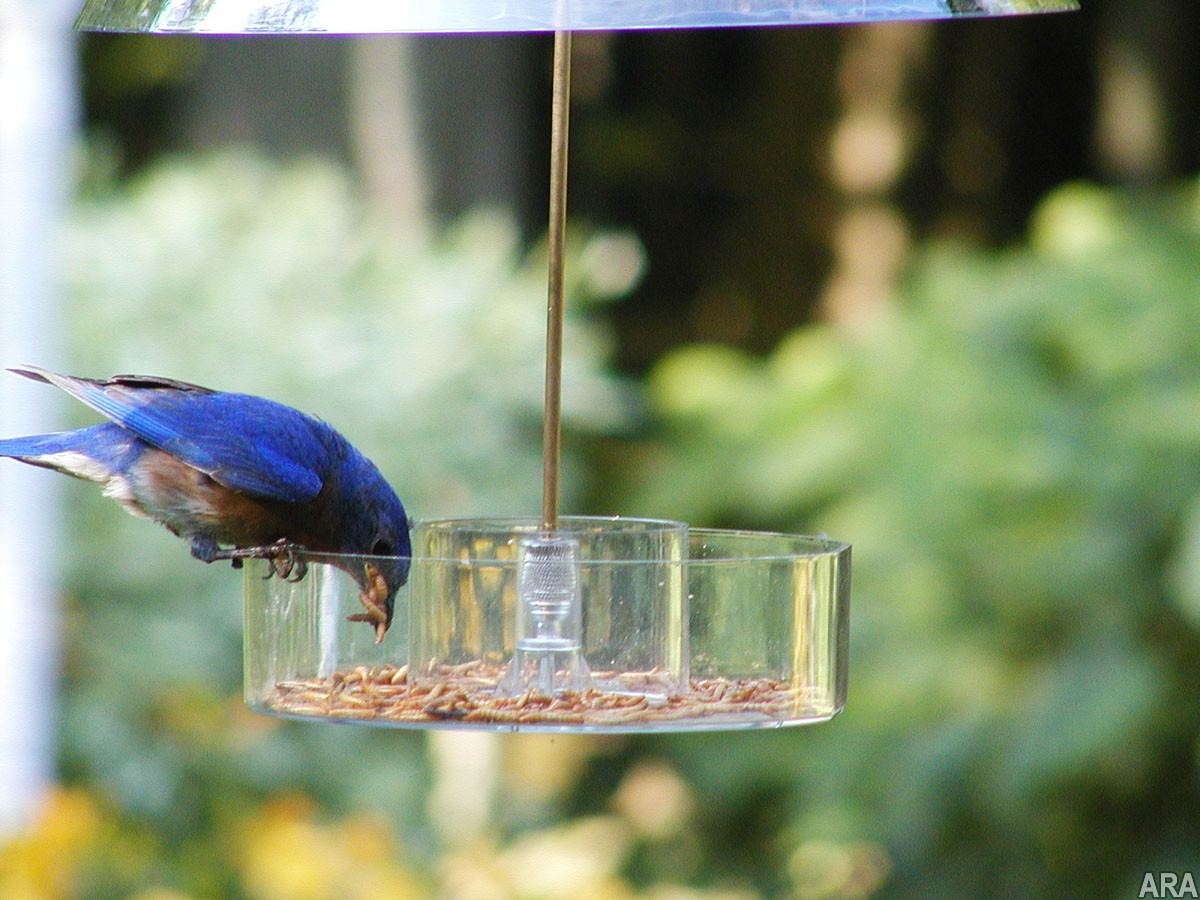Bird feeding basics: Simple ways to attract birds to your backyard 3