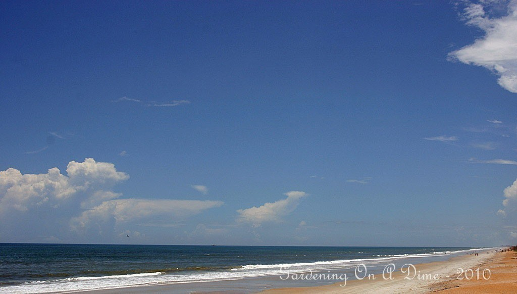 Beachy Blue Skies