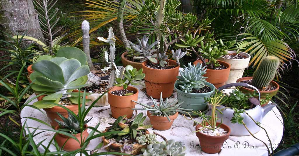 Succulents and Cacti Collection