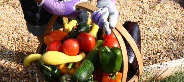 Veggin out is so in: Tips for starting your own veggie garden 1