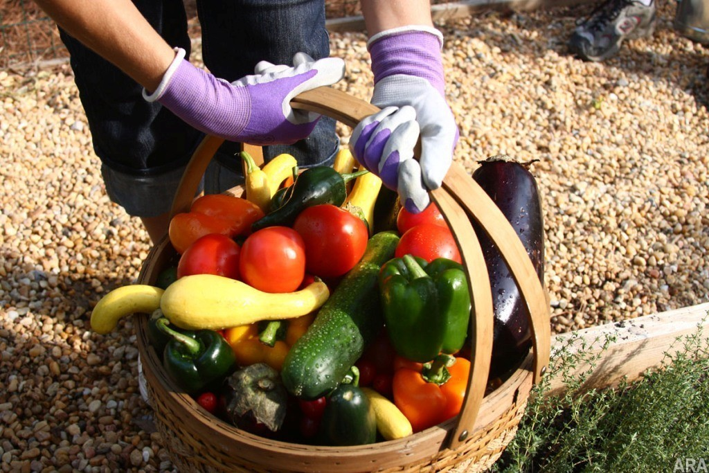 Veggin out is so in: Tips for starting your own veggie garden 5
