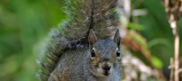 Bird feeder battles: Winning the war against squirrels 1