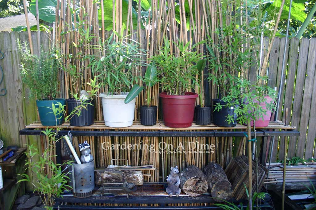 DIY Bamboo Pole Rack 4