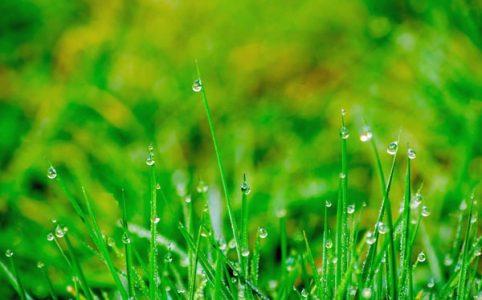 Raindrops-on-Grass