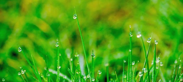 Raindrops-on-Grass