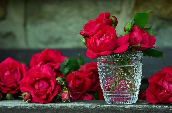 Roses in a glass of water