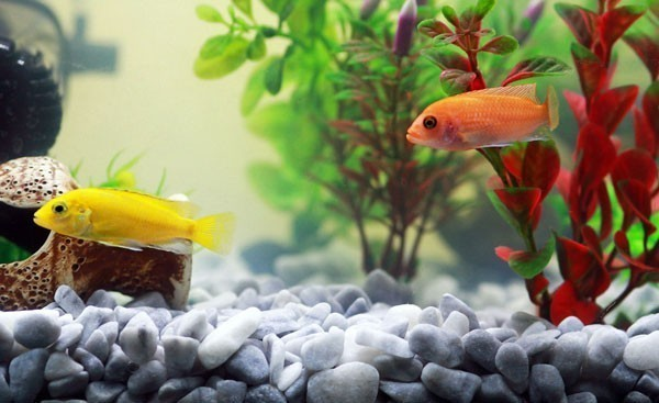Indoor garden ideas - A fish tank with rocks and plants.
