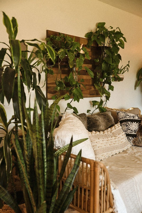 Indoor garden ideas - Plants placed on the wall above a sofa and on the floor next to it.
