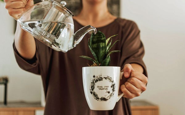 Indoor garden ideas - A woman watering a small plant that grows in a mug.