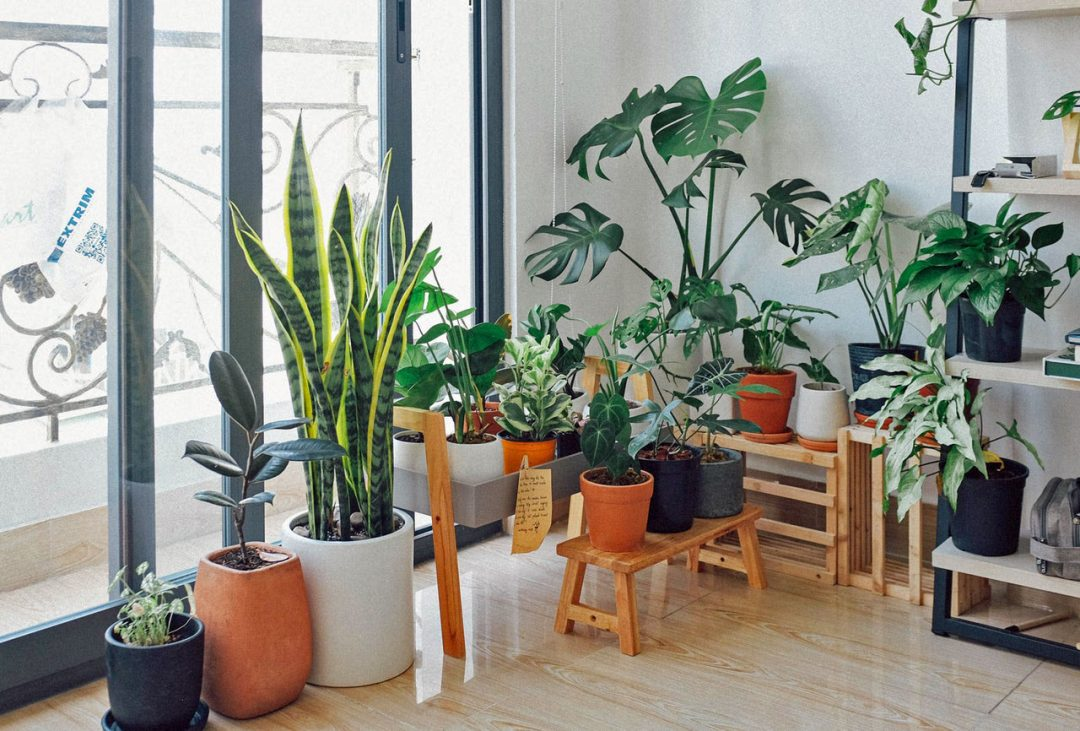Indoor garden ideas - Potted plants kept indoors next to a glass door.