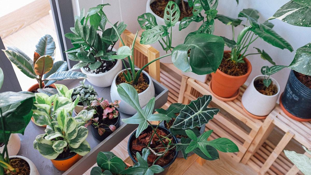 Urban Gardening Guide