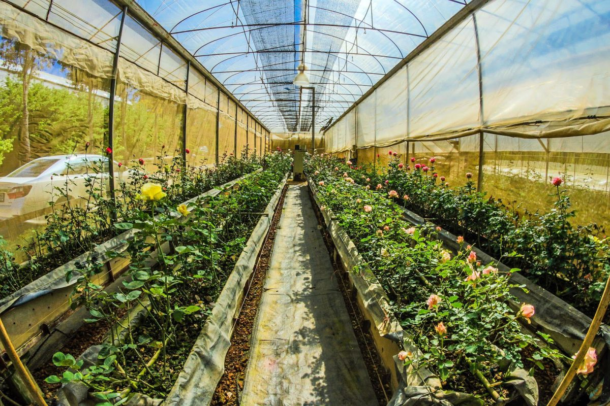 fish eye photo of greenhouse