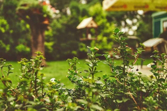 Garden-plants