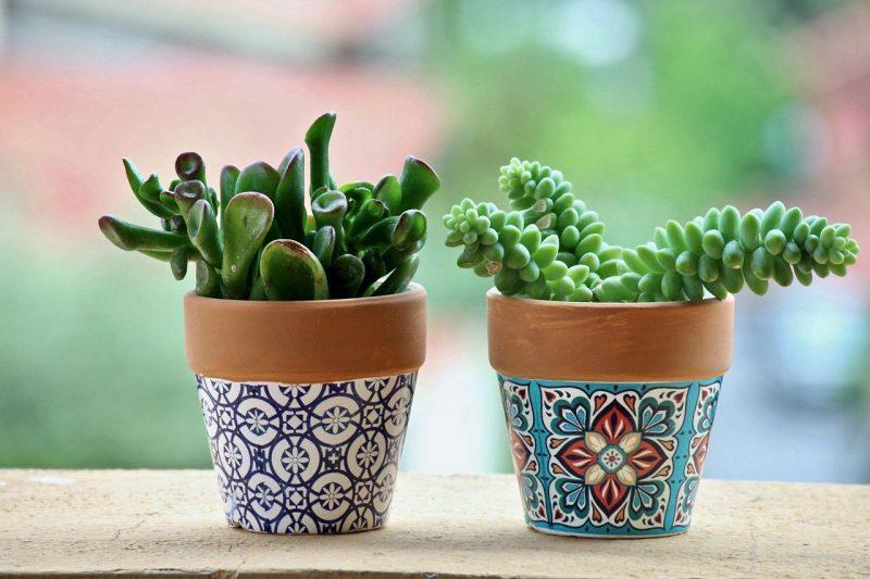 Two green small plants in colorful pots