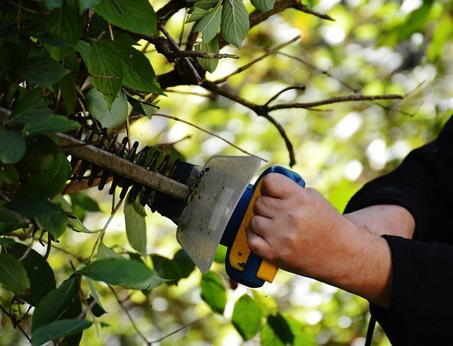 A man is trimming a Portuguese laurel hedge in a low-maintenance garden.