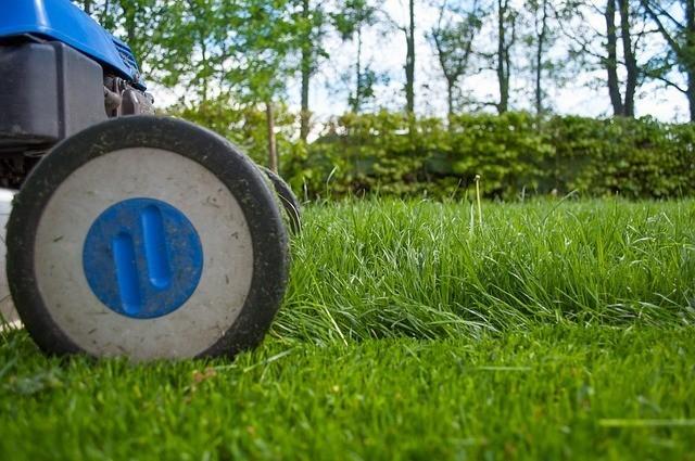 A closeup of a lawnmower cutting grass in a low-maintenance garden.