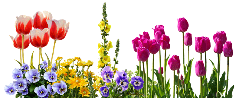 What's The Simplest Way To Get Started With Gardening?