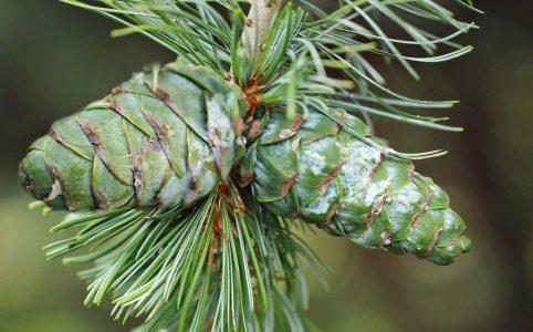 The ultimate guide to caring for evergreen trees