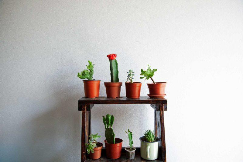 Small succulent plants as indoor decoration.