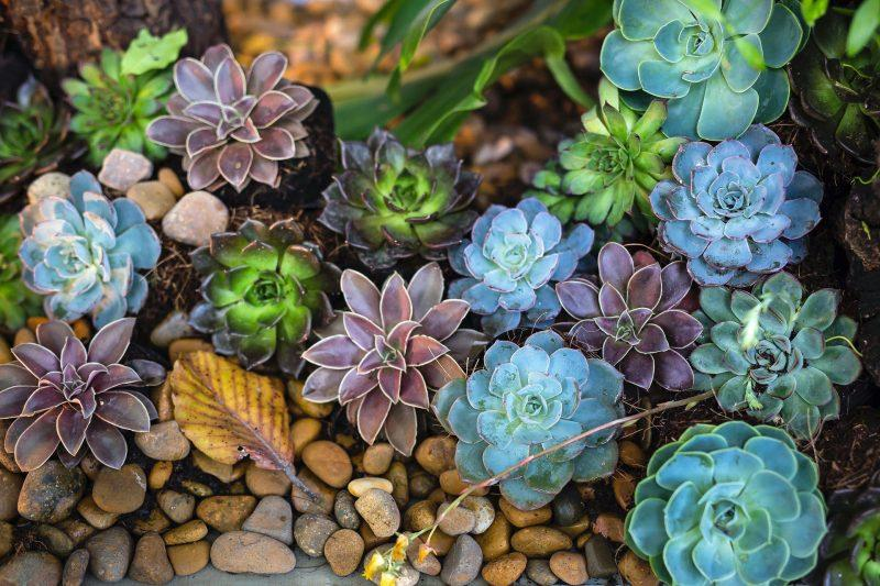 a bunch of succulents in a rock garden
