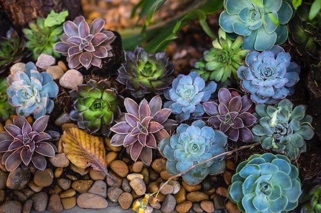 a bunch of succulents in a rock garden
