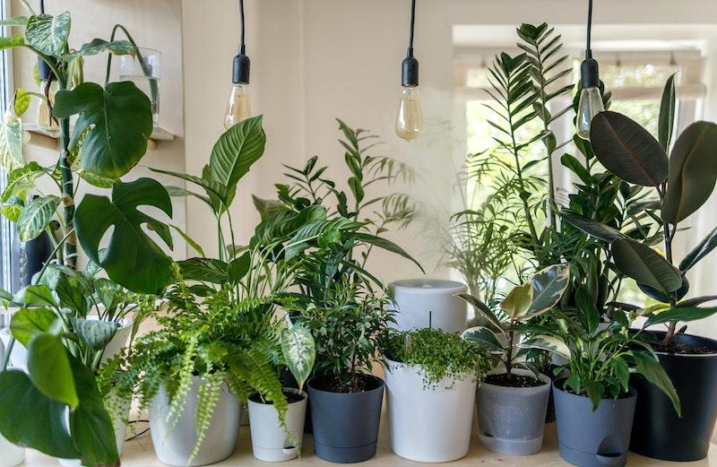 A variety of plants in ceramic pots
