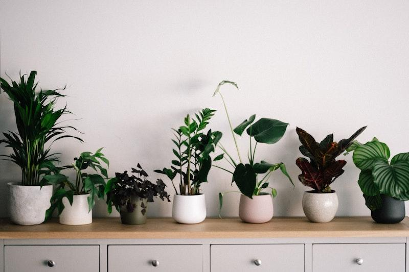 Plants in ceramic pots sitting on a countertop