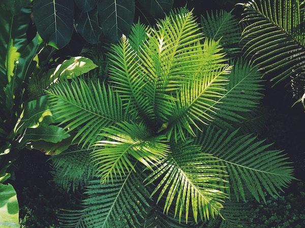 A tropical plant in a garden