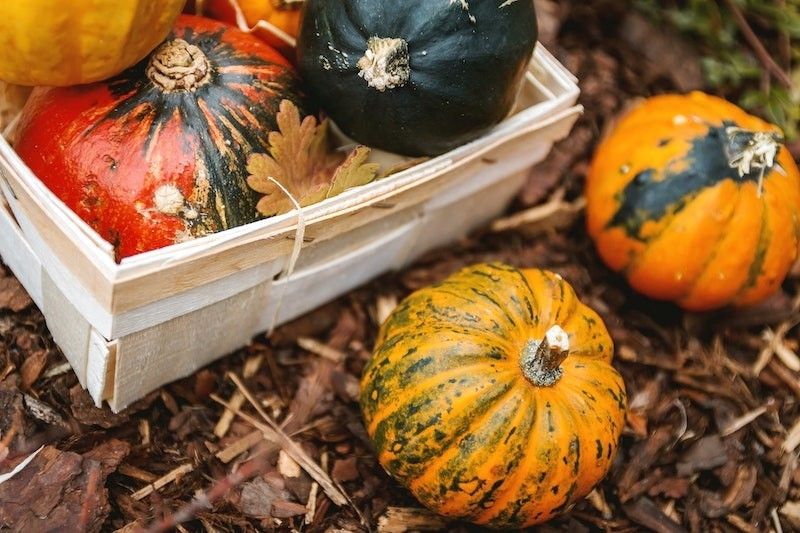 Different kinds of pumpkins